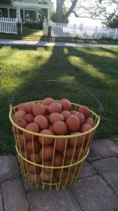 full-egg-basket-red-granite-farm