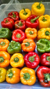 veg-colored-peppers-red-granite-farm