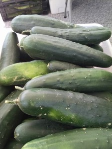 veg-cucumber-red-granite-farm