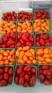veg-cyclone-tomatoes-red-granite-farm