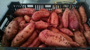 veg-sweet-potatoes-red-granite-farm